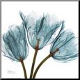 Tulips in Blue Lámina montada en tabla por Albert Koetsier