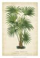 Palm of the Tropics IV Impressão giclée por Van Houtteano