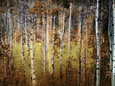 Crunchy Fotografická reprodukce od Ursula Abresch