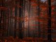 Duchowy las Reprodukcja zdjęcia według Philippe Sainte-Laudy