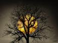 Sunset Behind a Tree Fotografická reprodukce od Marco Carmassi