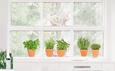 All My Herbs (Window Decal) Pencere Çıkartmaları