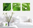 Nærbilleder af botanik (farvefotografi) Posters
