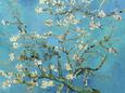 Mandeltræer - van Gogh Posters
