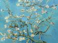 Blomstrende mandeltræ, Saint-Rémy, ca.1890 Kunsttryk af Vincent van Gogh