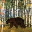 Bear Umělecká reprodukce od Lynnea Washburn