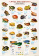 Tortues de mer et tortues de terre Posters