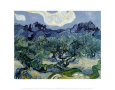 Landscape with Olive Trees Kunsttryk af Vincent van Gogh