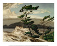 White Pine Art Print by A. J. Casson