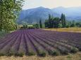 Lavender Field, Plateau De Sault, Provence, France Fotografisk tryk af Guy Thouvenin
