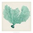 Sea Fan VI Giclée-tryk af Tim O'toole