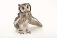 A Northern White-Faced Owl, Ptilopsis Leucotis, at the Cincinnati Zoo Fotografisk tryk af Joel Sartore