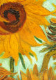 Twelve Sunflowers (detail) Art Print by Vincent van Gogh