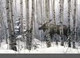 A Walk in the Woods Kunsttryk af Stephen Lyman
