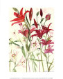 Lilies Art Print by Elizabeth Blackadder