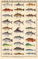 Game Fish of the Saltwater Flats and Shallows Art Print
