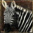 Zebra Portrait Kunsttryk af Fabienne Arietti