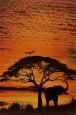 Den afrikanske himmel Plakat