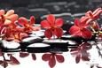 Branch Red Orchid with Zen Stones Reflection Impressão fotográfica por crystalfoto