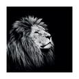 Løver Posters