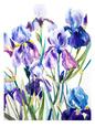 Iris Kunsttryk af Suren Nersisyan