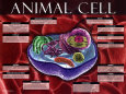 Animal Cell Konsttryck