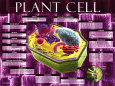 Plant Cell Konsttryck