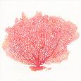 Watercolor Coral II Umělecká reprodukce od Jario Rodriguez