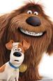 Secret Life Of Pets- Adorable Duo Póster