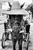 !Viva Mexico! B&W Collection - Horse with a straw Hat II