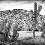 !Viva Mexico! Square Collection - Mexican Cactus III