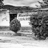 !Viva Mexico! Square Collection - Miscelanea Mary IV