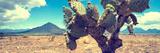 !Viva Mexico! Panoramic Collection - Desert Cactus IV