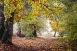 Autumn Break under the Trees