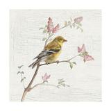 Female Goldfinch Vintage