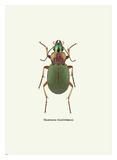 Beetle Green