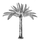 Vintage Palm Tree - Square