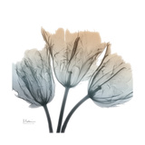 Earthy Tulips