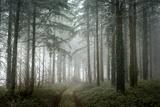 winter sweet forest