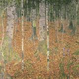 The Birch Wood