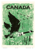 Canada - Geese