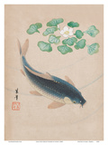 Carp with Water Flowers
