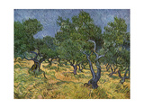 Olive Orchard Mid-June, 1889