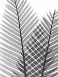 Tropical Fern 1