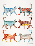 Cat Collection