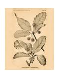 Vintage Botanical III