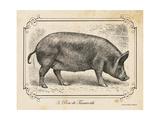 Farm Pig I