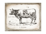 French Cow IV