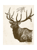 Neutral Deer II