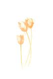 Bouquet Blush VIII